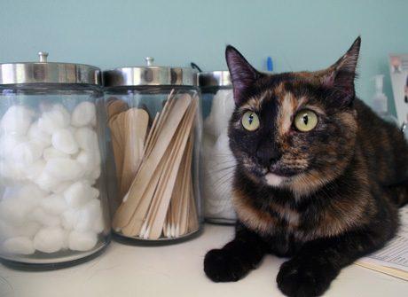 Cat-Vets-Medium