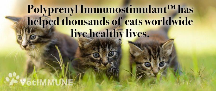 Poyprenyl Immunostimulant for healthy life