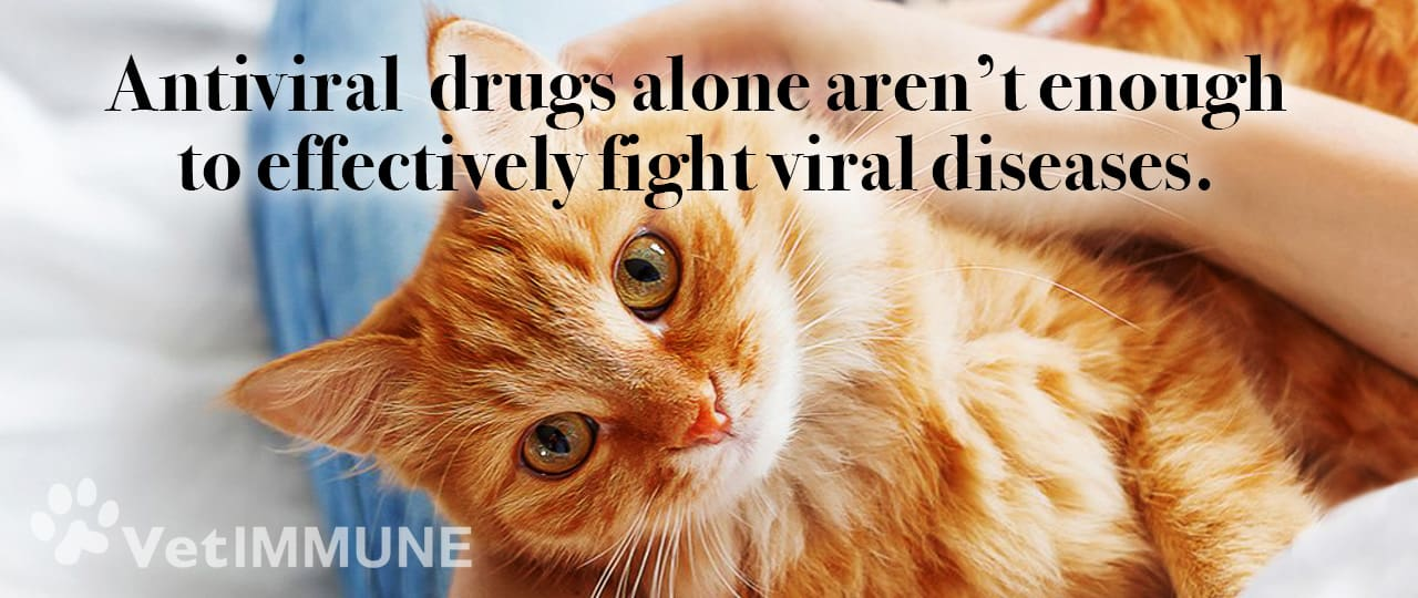 antiviral drugs are not enough to effectively fight viral diseases