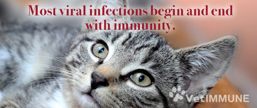 viral-infections-end-with immunity
